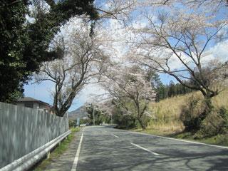 K12 桜
